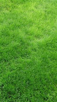 Texture Grass Field Green iPhone se wallpaper