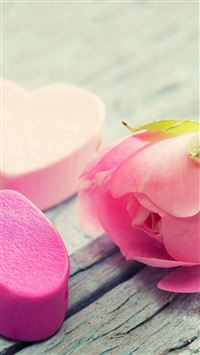 Nature Elegant Pure Rose Flower iPhone se wallpaper