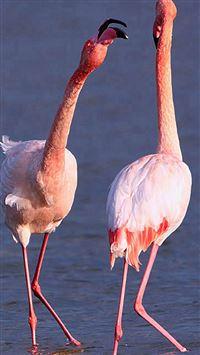 Camargue Rose Flamingo iPhone se wallpaper