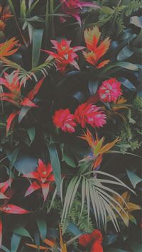 Tropical Flowers Mix iPhone se wallpaper