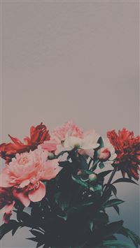 Peony Flowers Bouquet iPhone se wallpaper