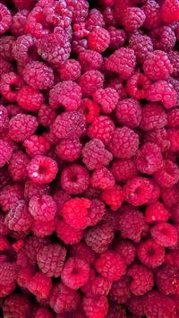 Fresh Raspberries iPhone se wallpaper