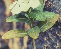 Cliff Mountain Wall Living Dew Flower Petal iPhone se wallpaper