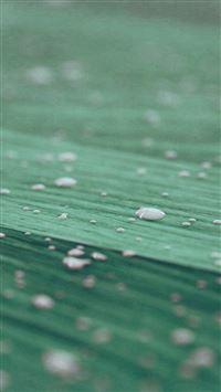Drops Of Milk On Floor Pattern Nature Green iPhone se wallpaper