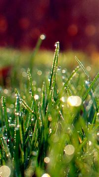 Dew On Grass Sunshine iPhone se wallpaper