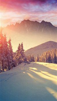 Sun Shining Through Winter Pine Trees  iPhone se wallpaper