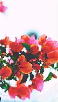 Red Flowers Closeup iPhone wallpaper