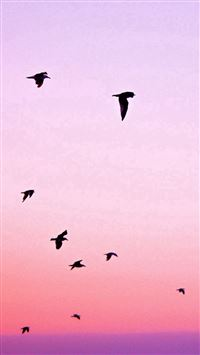 Birds Flying In Purple Sunset iPhone se wallpaper