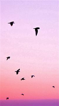 Birds Flying In Purple Sunset iPhone se wallpaper