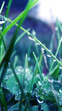 Grass dew drops iPhone se wallpaper