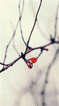 Water winter tree flower iPhone se wallpaper