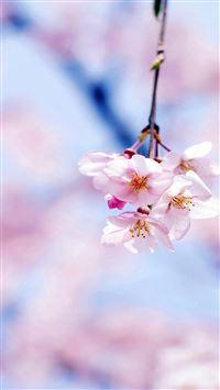 Cherry blossom iPhone se wallpaper