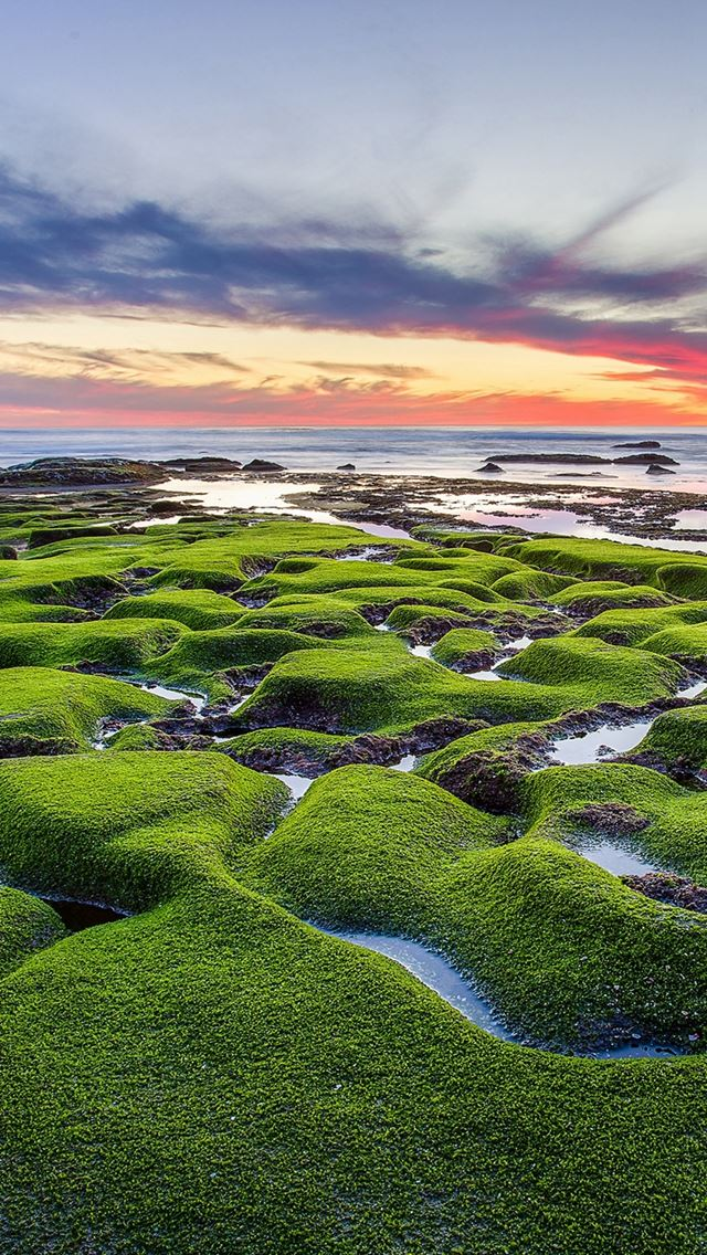 Green shore sea iPhone se wallpaper