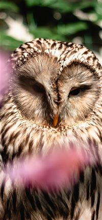 Ural-Owl iPhone se wallpaper