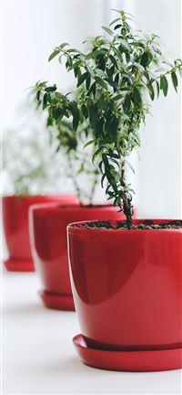 plant iPhone se wallpaper