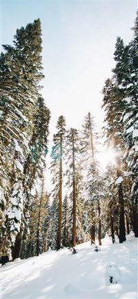 Castle-Peak-wilderness iPhone se wallpaper