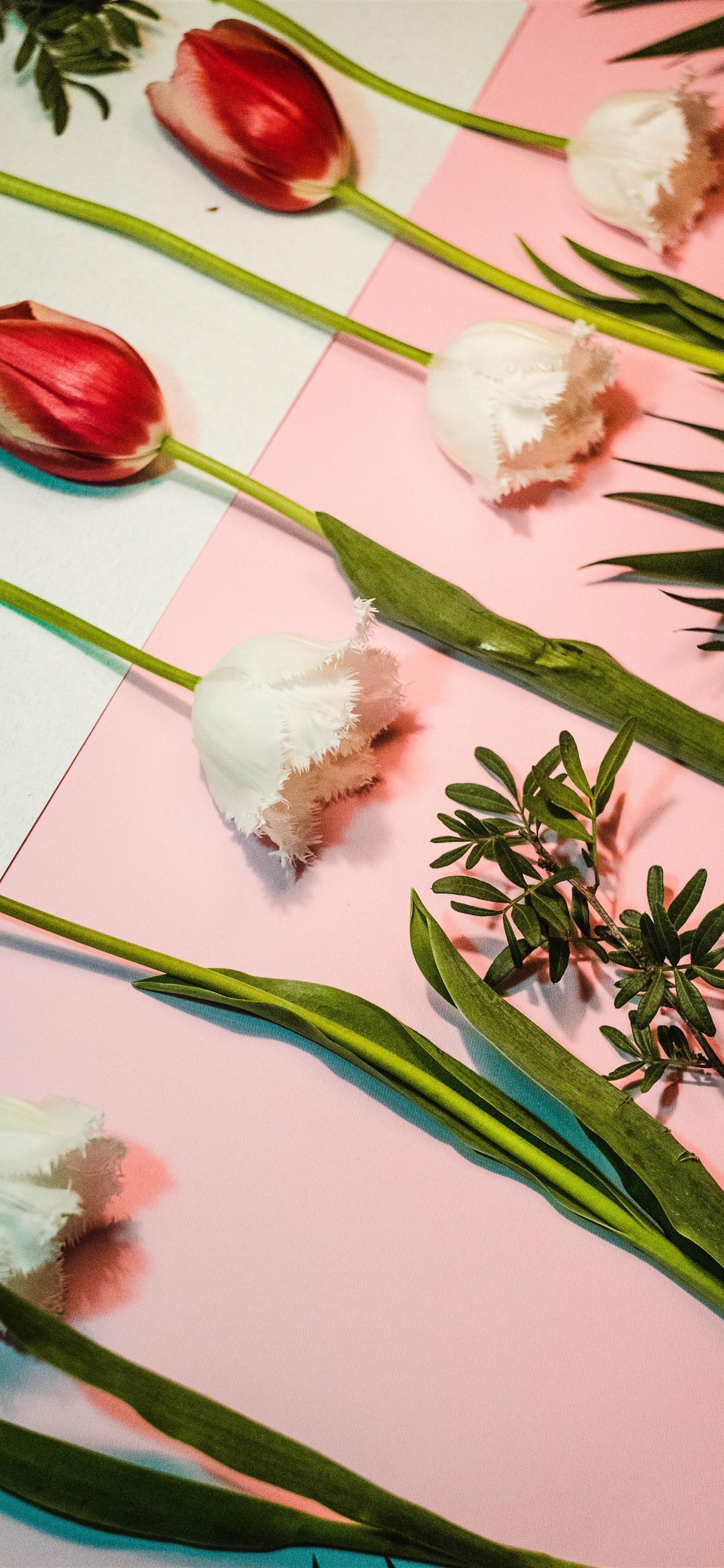 Tulipsomania iPhone se wallpaper