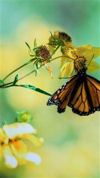 Butterfly on Flower iPhone se wallpaper