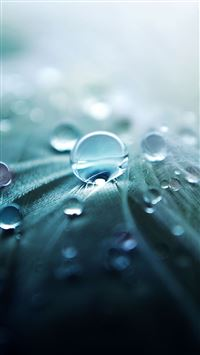 Pure Dew Closeups iPhone se wallpaper