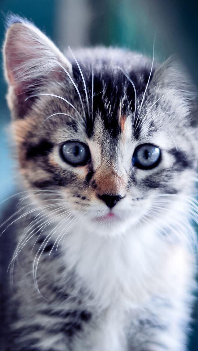 Cute Kitten IPhone Se Wallpaper