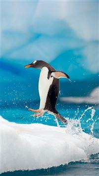 Penguin Jumping iPhone se wallpaper