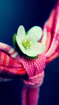 Little White Flower iPhone se wallpaper