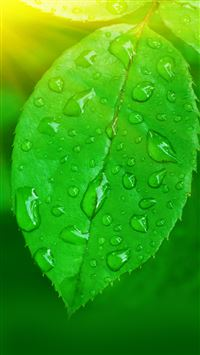 Green Leaf iPhone se wallpaper