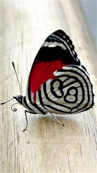 Butterfly iPhone se wallpaper
