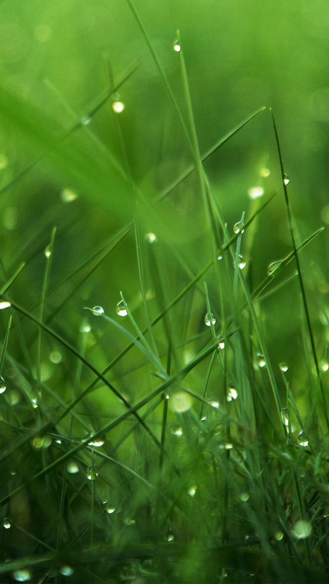 Dew on grass iphone se wallpaper download iphone wallpapers ipad dew on grass iphone se wallpaper voltagebd Image collections