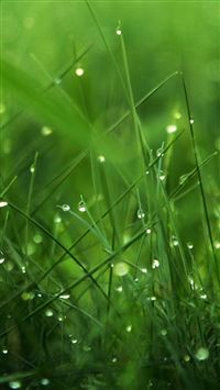 Dew on Grass iPhone se wallpaper