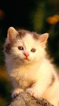 Little Cat Watching Poor iPhone se wallpaper
