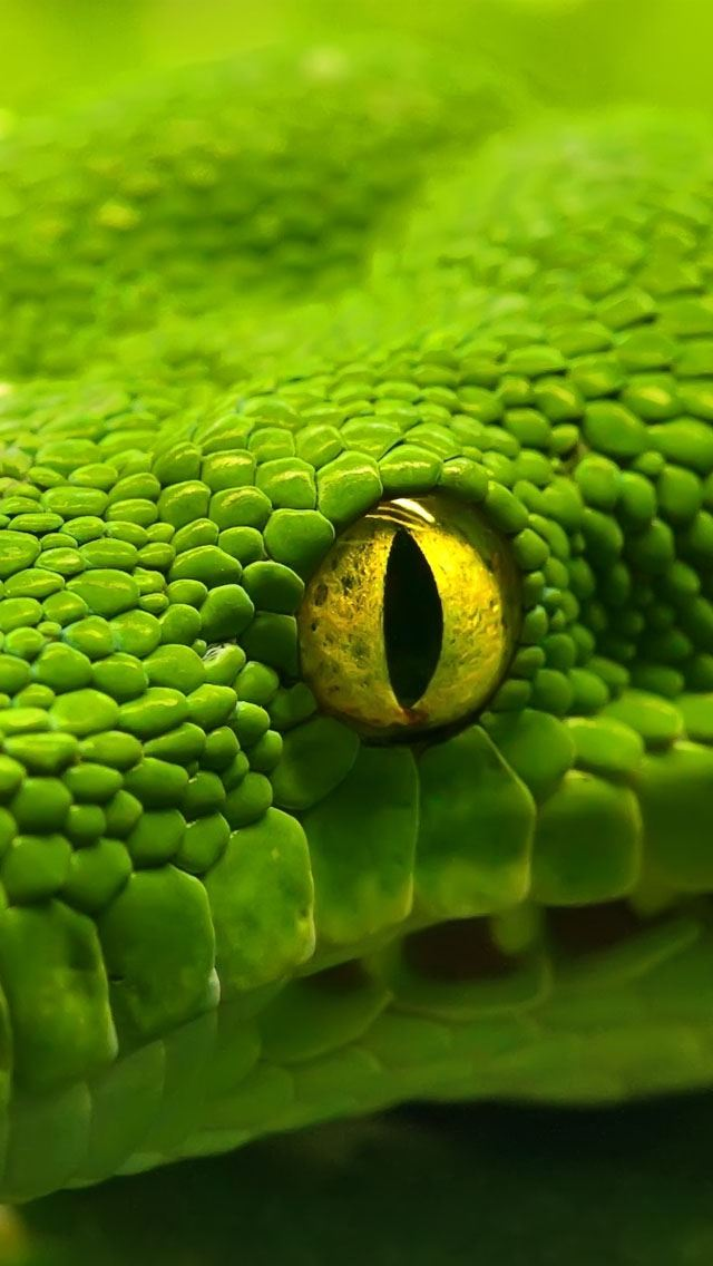 Green Emerald Boa Snake IPhone Se Wallpaper