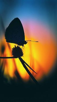 butterfly at dawn iPhone wallpaper