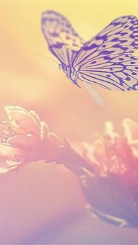 Fairy Butterfly On Flower iPhone wallpaper