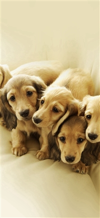 Puppy Retriever Family Animal iPhone X wallpaper