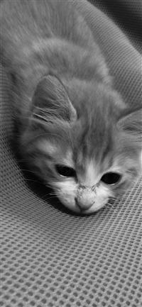 Cute Cat Pet Animal Dark Bed At Ease iPhone X wallpaper