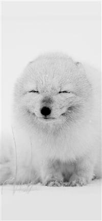 Arctic Fox Happy Moment iPhone X wallpaper