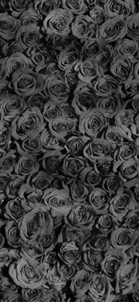 Rose Dark Bw Pattern iPhone X wallpaper