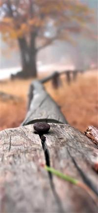 Nail On Wooden Fenece Bokeh Blur iPhone X wallpaper
