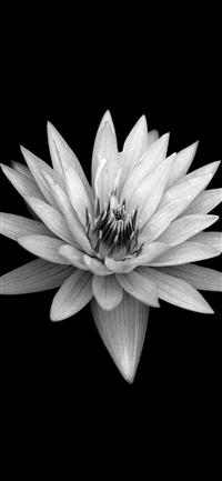 Dark Flower Black Background iPhone X wallpaper