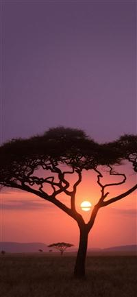 Solo Tree Safari Africa Sunset iPhone X wallpaper