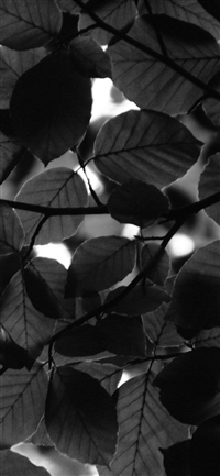 Tree Blossom Nature Leaf Green Dark Bw iPhone X wallpaper