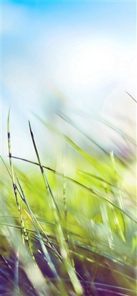 Nature Green Grass Bokeh Summer Flare iPhone X wallpaper