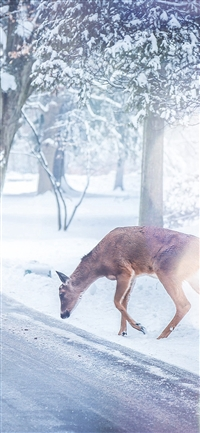 Christmas Deer Street Snow Winter Nature Animal White iPhone X wallpaper