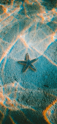starfish sea beach iPhone X wallpaper