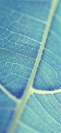 Leaf  vein bokeh iPhone X wallpaper