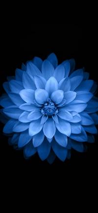 Blue lotus iPhone X wallpaper