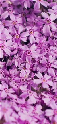 Violet flower iPhone X wallpaper