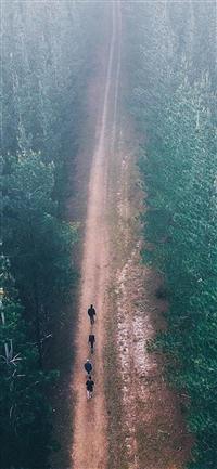 Wood road iPhone X wallpaper