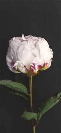 Flower iPhone X wallpaper